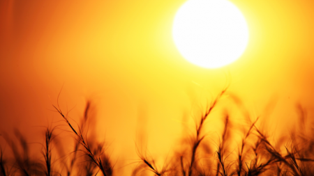 Consejos para sobrellevar la ola de calor