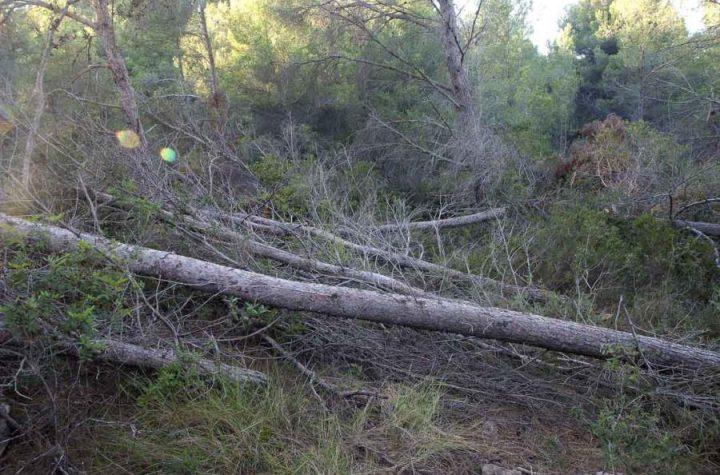 ¿La mejor solución para evitar incendios es prohibir el acceso al bosque?